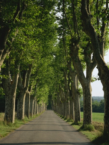 Straight, Empty, Tree Lined Road, Normandy, France, Europe