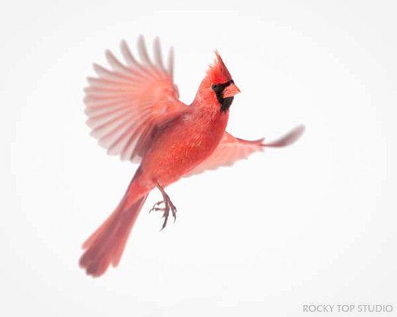Cardinal Bird Tattoo Designs