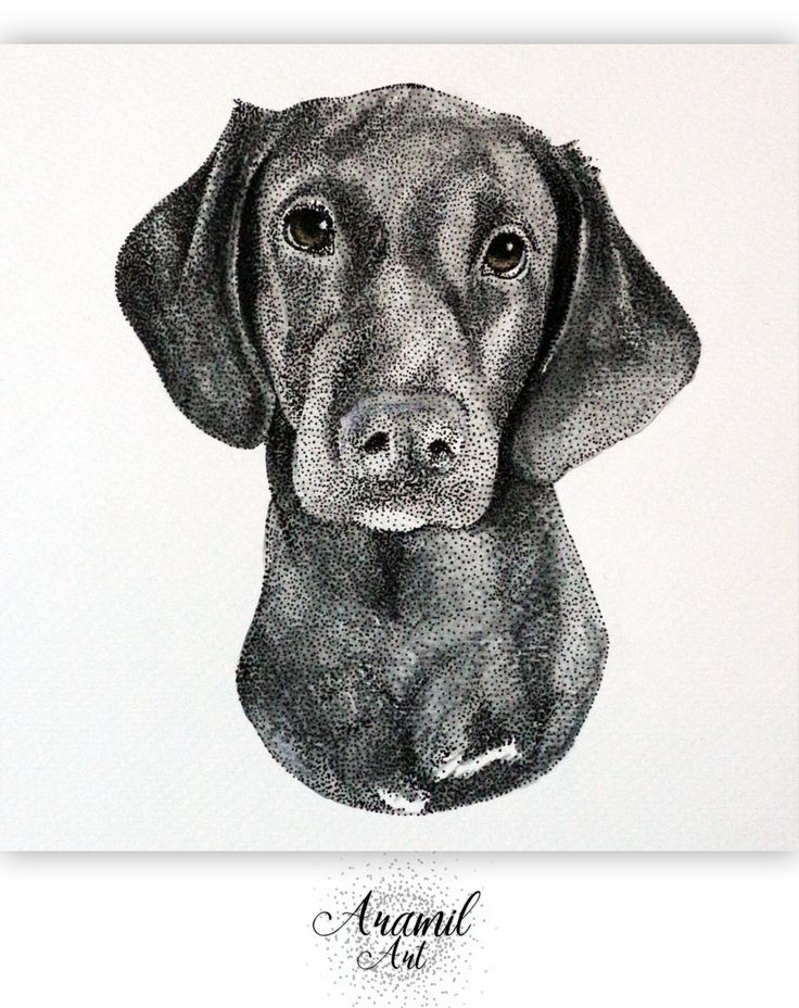 Dog drawing, created by using about a thousand dots and colored with watercolour pencil. Art by Petra Jánosi. Come and check on FB. :) www.facebook.com/aramilart