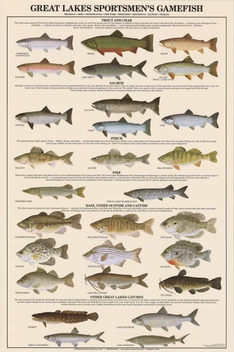 15 best images about fishing id charts on pinterest for Freshwater fish chart
