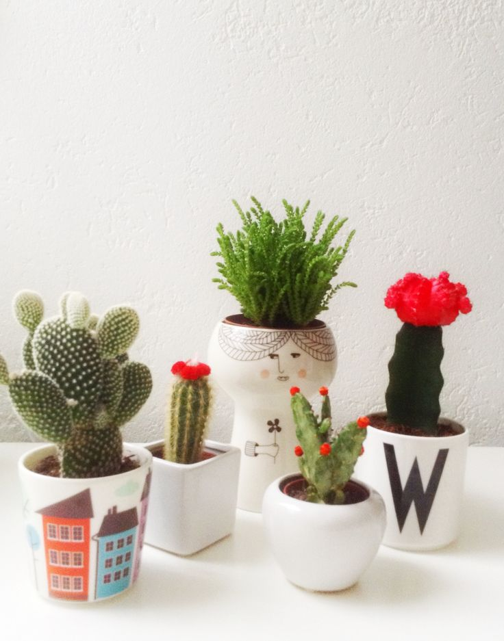 Cactus, Grass, And Cute Planters
