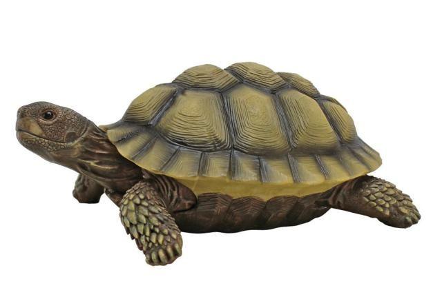 Find Best Feng Shui Symbols for Your Home: Tortoise Symbol in Feng Shui