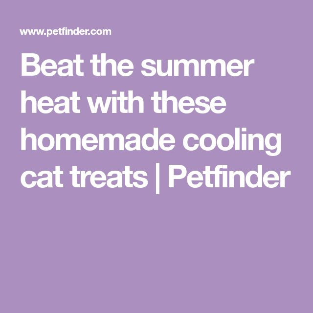 Beat the summer heat with these homemade cooling cat treats | Petfinder