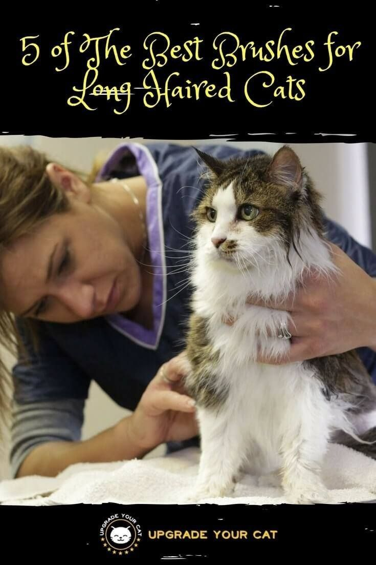 373f0112b60a02834af9a0e16f4e85eb - How To Get Knots Out Of A Long Haired Cat