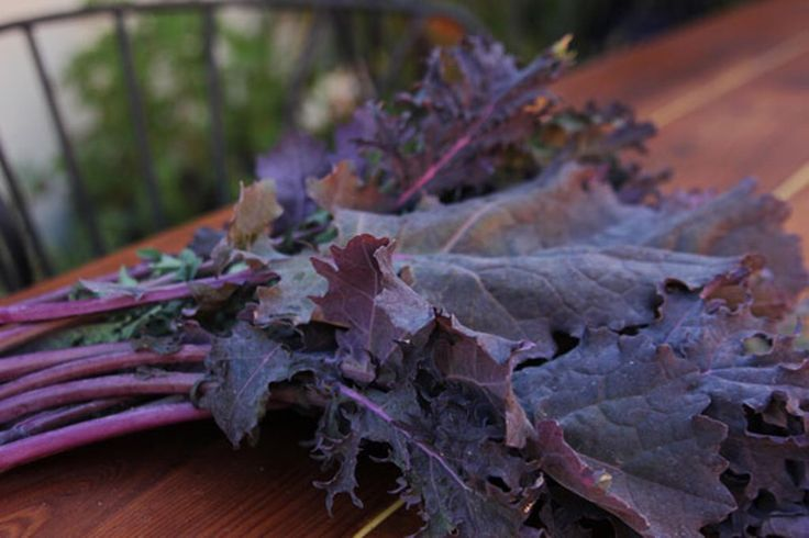 Kale Seeds - 'Red Russian Kale, Highly Nutritious~Entire plant can be used ~Plant in spring and fall for healthy greens all year long. by CaribbeanGarden on Etsy https://www.etsy.com/listing/178713592/kale-seeds-red-russian-kale-highly