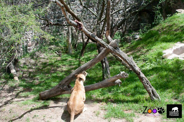 Ranas Marsupiales