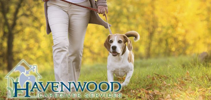 For many Seniors, their pets are their best friends and closest companions. Unfortunately, caring for a pet can be too time consuming and stressful for some Seniors. Havenwood Caregivers can lend a hand when it comes to ensuring that a Senior's beloved animal friend stays healthy and active.  #PetTherapy #OldAge #CompanionAnimal #Havenwood #Caregiving #InHomeCare