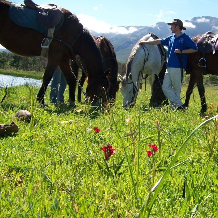 Stunning scenery and excellent horse riding opportunities in Tulbagh, just over an hour from Cape Town - Horse riding trails in Tulbagh, Western Cape, South Africa