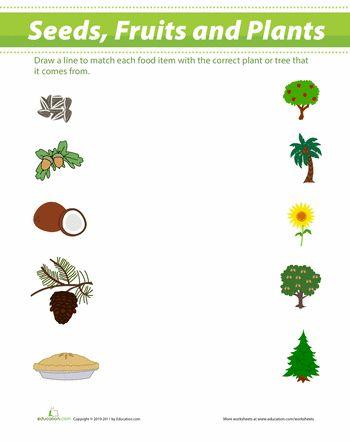 seeds and fruit fruit seeds plant drawing. Black Bedroom Furniture Sets. Home Design Ideas