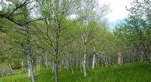 g.Tod Sloane photos newfoundland - Yahoo Image Search Results