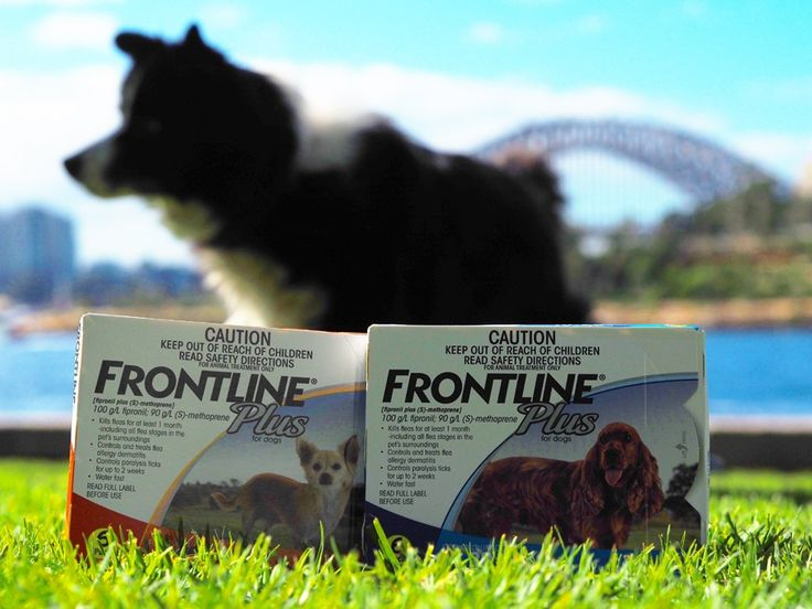 Team PuppyGoGo was approached to undertake an independent review of Frontline Plus for dogs. After getting our paws on the product we went ahead and gave it a GoGo!