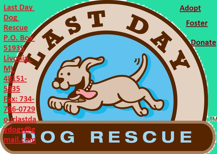 Welcome to Last Day Dog Rescue!      Last Day is more than just a name, it is the situation all of our dogs were faced with. Now all of our wonderful dogs get a second chance at life!  Dogs coming into our non-profit 501(c)(3) rescue were saved from high-kill animal shelters or were going to be sold for research. All persons in our  rescue are volunteers.