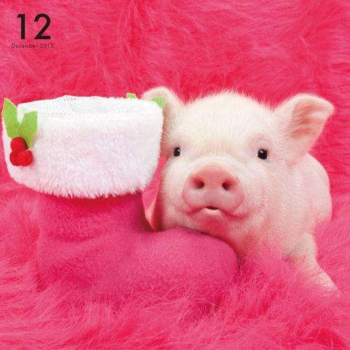 THE PIG PINK   OTHER   Artlist Collection CALENDAR 2015: