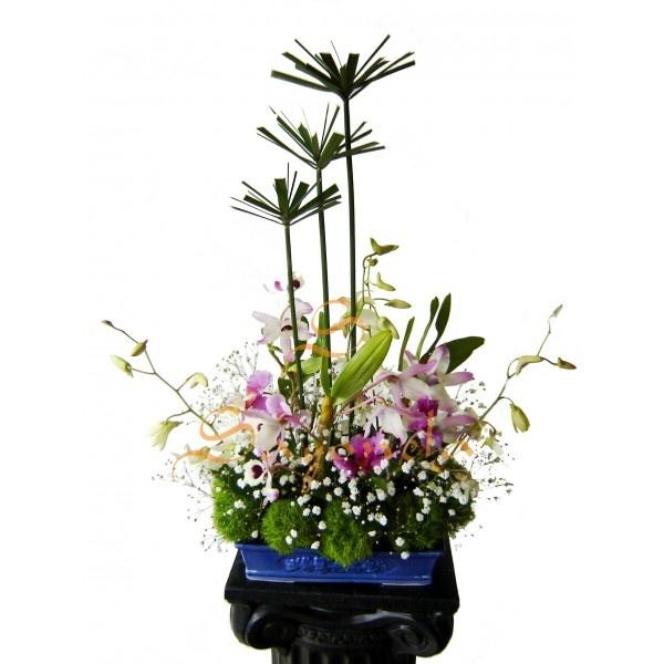 Arreglo compuesto por:        6 Orquideas Hawayanas      4 Varas Dendrobium      Follaje Grinbols y Sombrillas Chinas      Base en Porcelana