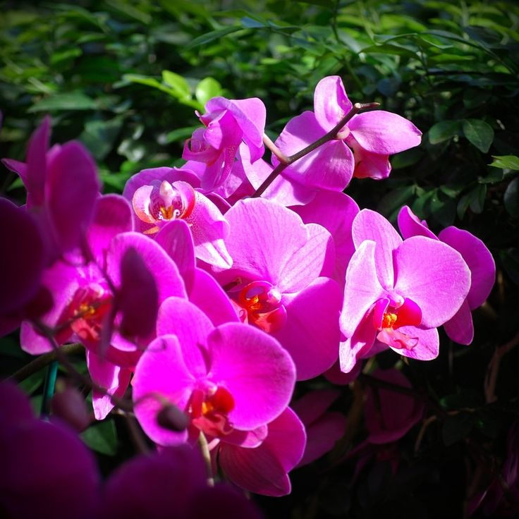 Fuschia Orchids By Socallmenothing On Deviantart with Fuschia Orchids Fuschia Orchids | AMENagement-lego.com