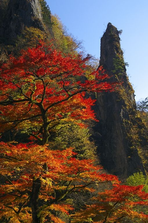 Autumn foliage -Nippara, Okutama, Tokyo 日原鍾乳洞付近