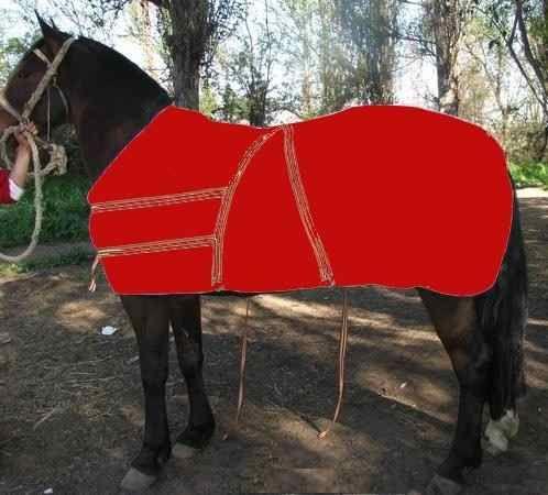 carpa caballo