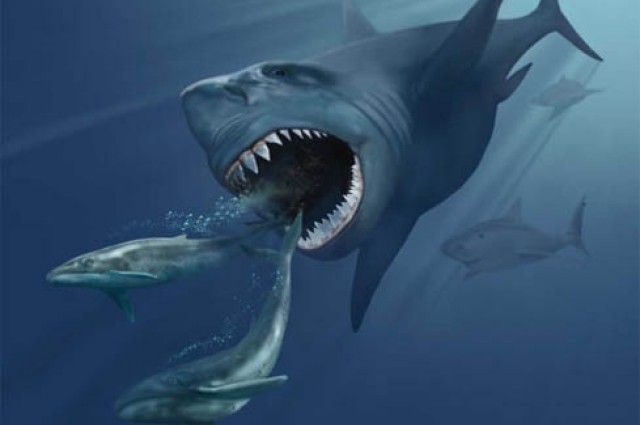 """Could Megalodon Still Live In The Deep Ocean? - LOL the caption for the image at the bottom: """"Just sitting in one's jaw, as one does"""" Read more at http://www.iflscience.com/plants-and-animals/could-megalodon-still-live-deep-ocean#KskMoi6eSDUvSduE.99"""