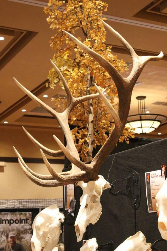 Elk mount fireplace - photo#36