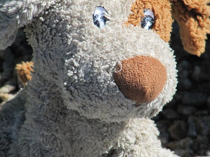 Lost on 06 Aug. 2016 @ Monterey, CA (USA). My very loved toyfriend Pluto went…