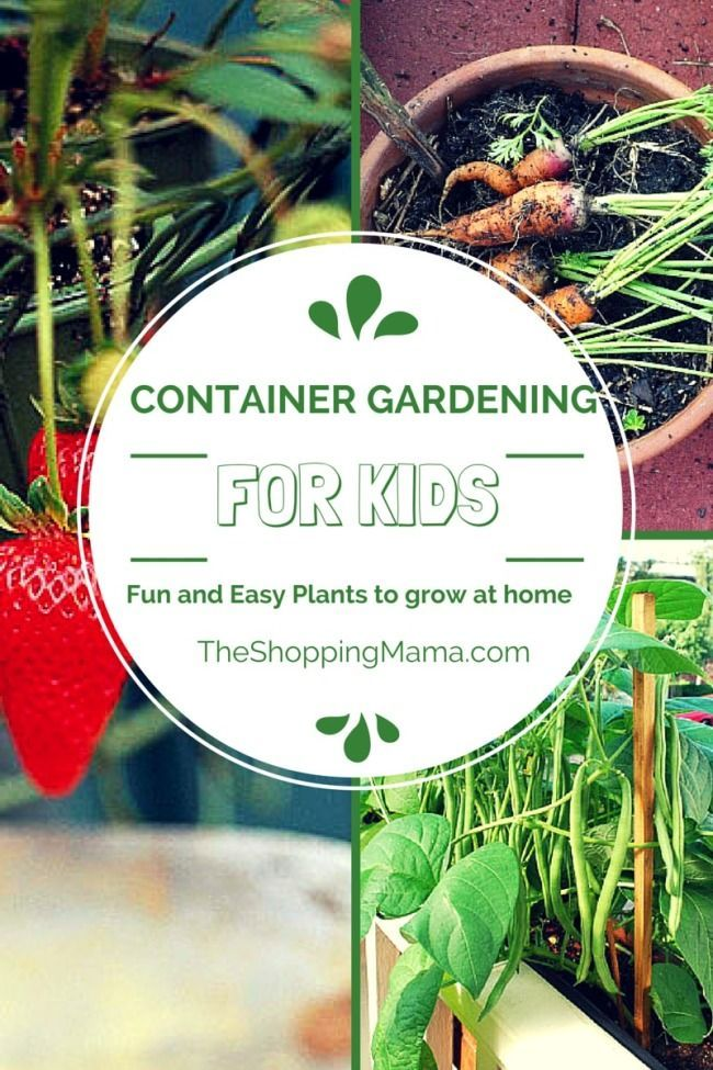 Container Gardening for Kids - fun and easy plants to grow at home