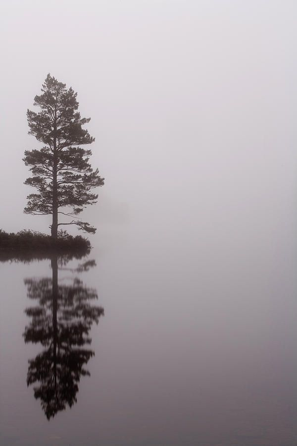 Misty autumn morning on Loch Eilein - The Cairngorms, Scotland, UK....love the serenity of this picture.