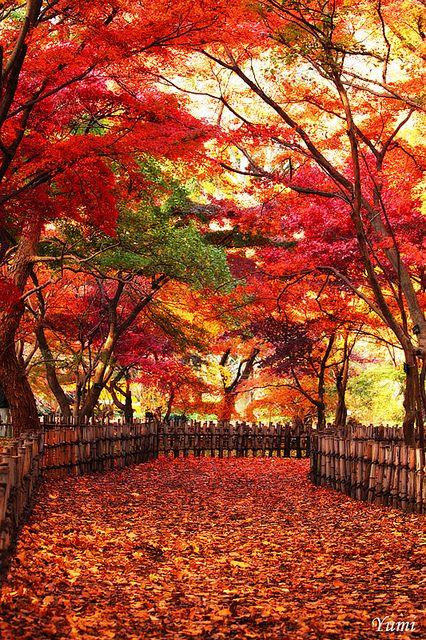 紅葉、絶景