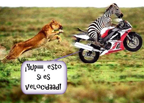 PAISAJES CON MENSAJES | zebra-en-moto.jpg