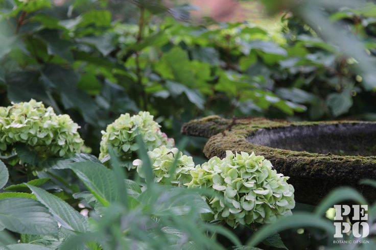 Hydrangea's and water feature's By Pepo Botanic Design