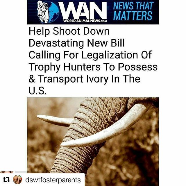 To all my folks who care about saving wildlife please go to the link and send in your letter to your representative!  #Repost @dswtfosterparents with @repostapp ・・・ 🆘For those in the USA,  there is a link in my bio (@dswtfosterparents ) that will send a letter to your representative,  please do it.. it takes less than 3 minutes! 🆘 For everyone else,  there are 2 petitions you could sign , please go to @elephant_news_network and @clairewoodham245 click in their bio and please sign…