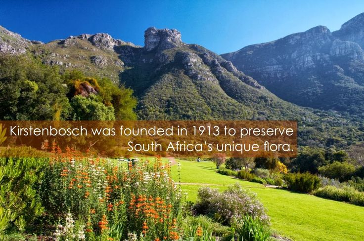 Fun travel fact : Kirstenbosch Gardens was founded in 1913 to preserve South Africa's unique flora.