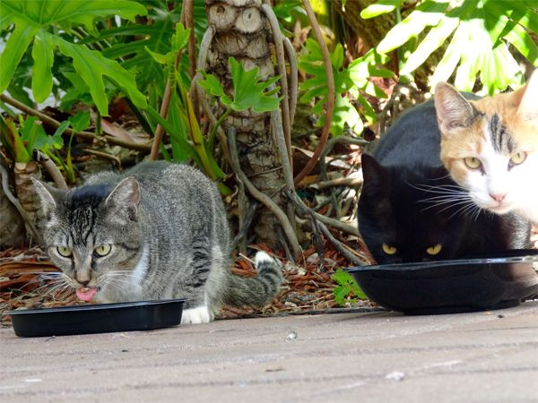 Feral cats in Miami http://ihavecat.com/2014/02/03/wine-for-cat-lovers-that-helps-cats/