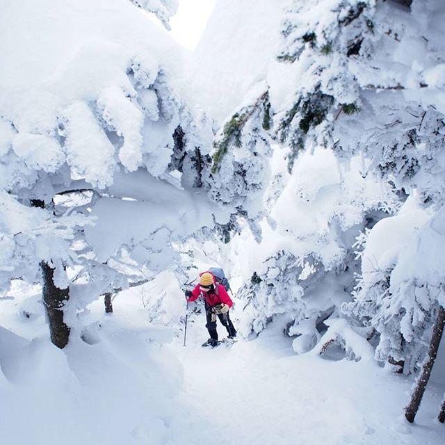 【yuripepe1218】さんのInstagramをピンしています。 《もっふもふ💓の雪歩き😆 こんもりと積もった雪がホイップクリームに見えてお腹すく~🍰💓 もしほんまにぜんぶホイップクリームやったらこの中に溺れたい~!!💓👼笑  写真はご一緒させていただいた@yuru_tabiさん💓 ウェア、帽子、ザックがカラフルで真っ白のなかに映えて素敵😍✨✨今回も楽しい山旅をありがとうございました😳💞 2017.01.25  #黒斑山#冬山#雪山#スノーシュー#ハイキング#青空#山#森#空#自然#好山病#登山#山が好き#風景#雪景色#山登り#絶景#アウトドア#樹氷#霧氷#ホイップクリームの森#白の世界 #winter #snow#bluesky#nature #mountain#climbing#trekking#outdoor》