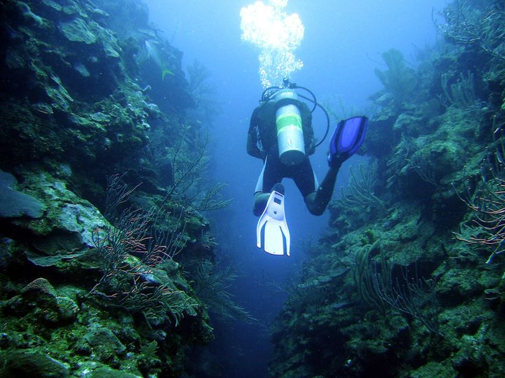 Belize Turneffe Atoll Dive Trips