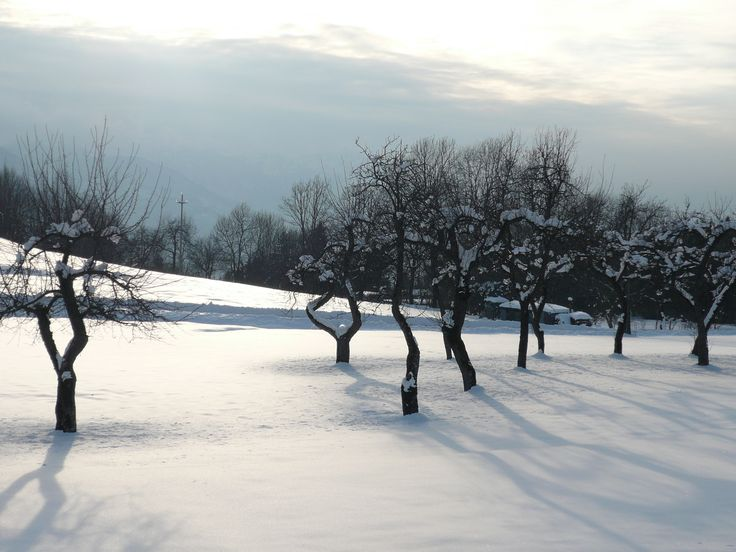 Allegnidis, neve, snow, Carnia, Friuli, Italy