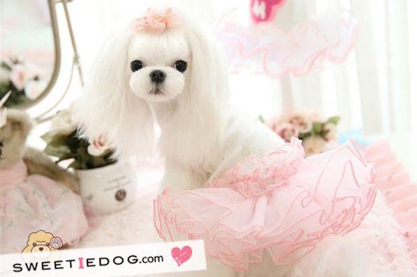 Dog dress Ballerina www.sweetiedog.com #dogdress #dogclothes #dog #ballerina #tutu #puppylove #maltese #pink #sweetiedog