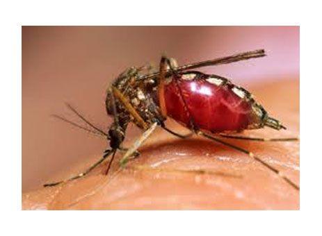 Paraíso vai promover mutirão de combate ao Aedes http://www.passosmgonline.com/index.php/2014-01-22-23-07-47/regiao/9956-paraiso-vai-promover-mutirao-de-combate-ao-aedes