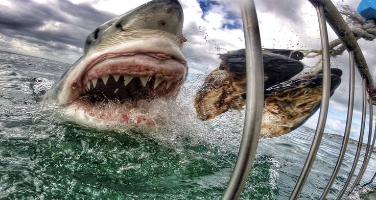 The best GoPro photos in the world