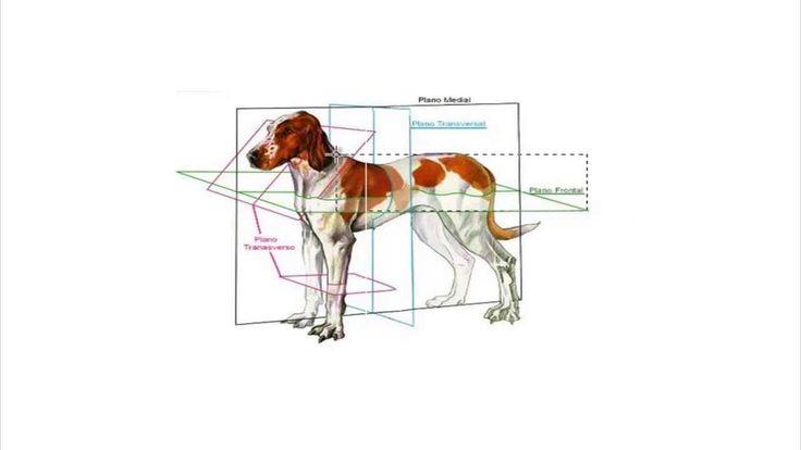 Anatomía Animal - Clase 02 Introducción
