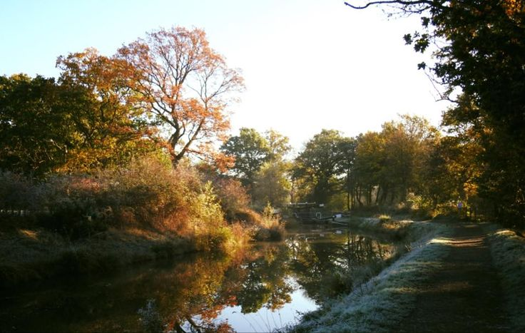 Autumn colours on the Wey and Arun Canal