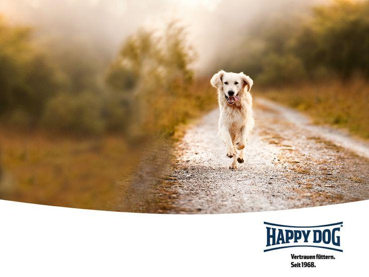 Τα προϊόντα της Happy Dog δημιουργούνται με μοναδικό στο είδος του τρόπο, με φυσικά συστατικά κατά πλειονότητα τοπικών γεωργών, αρωματικά χόρτα και πολλά θρεπτικά συστατικά για τους μικρούς μας φίλους, με εγγυημένη ασφάλεια προέλευσης! Υπό αυστηρούς ελέγχους ποιότητας δημιουργούνται μοναδικά στο είδος τους συνταγολόγια με χωνευτικότητα άνω του 90% για καλύτερη ευεξία του ζώου σας.