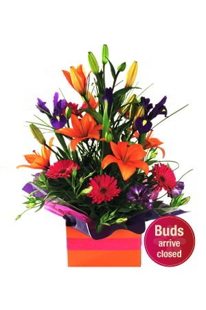 Excite    This fabulous, flashy and colourful boxed arrangement is sure to give an excitable reaction with its collage of enchanting and vibrant flowers, including orange Asiatic Lilies, purple Iris and pink Gerberas. It is suitable for all kinds of occasions,
