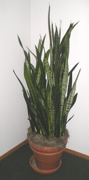 Low Light Plants