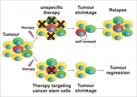 Cancer Stem Cells And Therapy If A Cancer Treatment