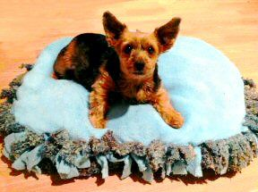 how to make your own dog bed using the materials you already own. No sewing Required. This is Miss Muffin sitting on her brand new dog bed