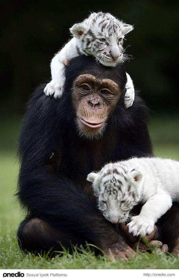 Anjana, die ihre Mutter verlassen musste, umarmte sie.
