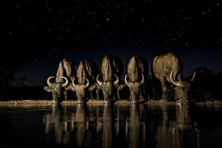 Лучшие фотографии с международного конкурса Travel photographer of the year 2016 - Ярмарка Мастеров - ручная работа, handmade