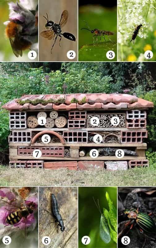 Das Insekten- oder Insektenhaus dient als Unterschlupf für Hilfskräfte …