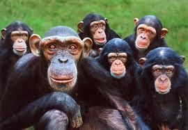 Hace 70 millones de años, entre los mamíferos se desarrollaron diferentes tipos de monos llamados primates. Los primeros primates fueron animales pequeños, de hábitos nocturnos, que vivían (casi siempre) en los árboles. Con el tiempo, algunos de éstos fueron cambiando sus hábitos y características físicas.