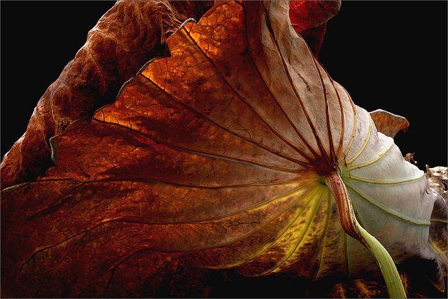 Brown | Flickr - Photo Sharing!